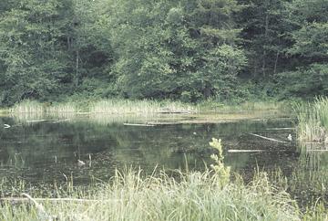 Puget Trough Ecoregion scene